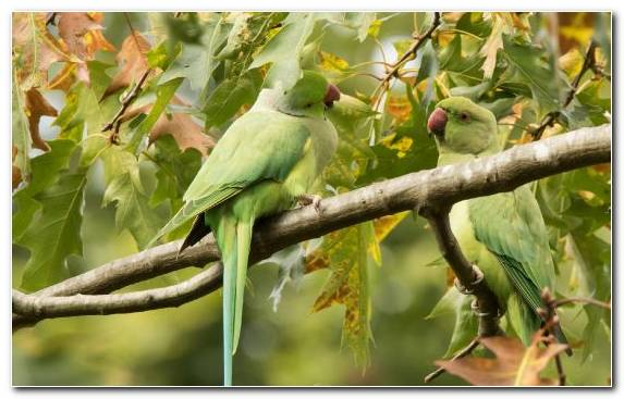 Image Parrot Bird Wildlife Parakeet Leaf
