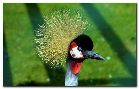 Image Parrot Crane Like Bird Water Bird Beak Bird Nest