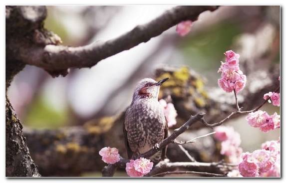 Image Parrot Flower Bird Beak Spring