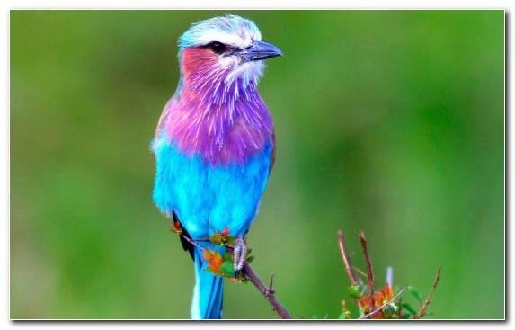 Image Parrot Lovebird Bird Reptile Rainbow Lorikeet
