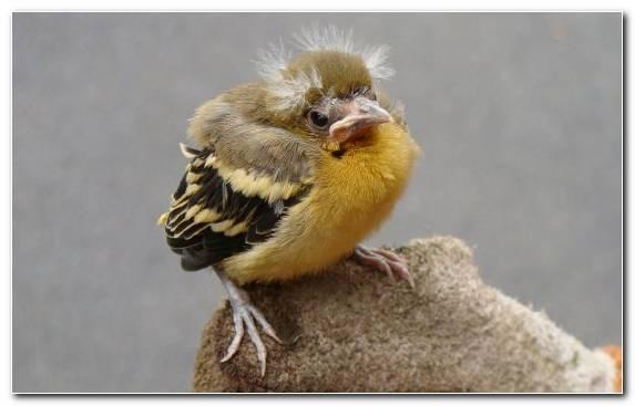 Image Passerine Beak Owl Bird Wildlife
