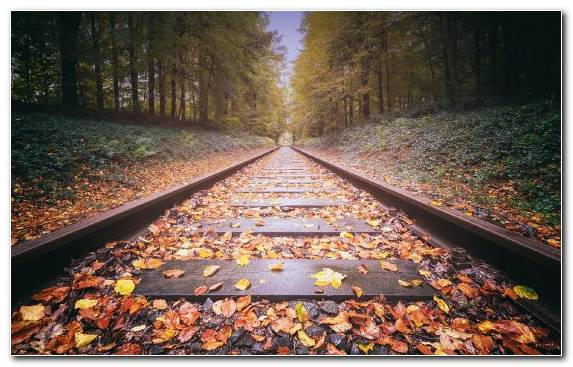 Image Path Sunlight Runway Autumn Deciduous