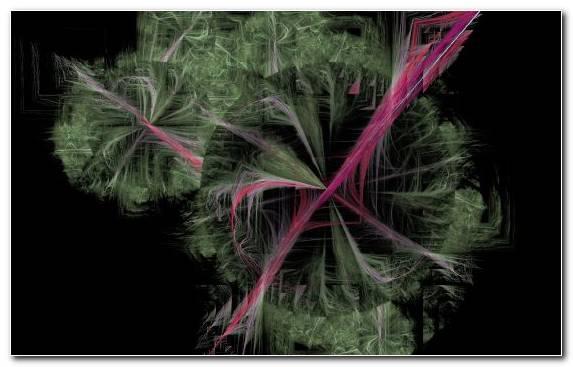 Image Pattern Flora Light Plant Branch