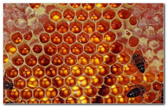 Image Patterns In Nature Invertebrates Orange Bee Worker Bee
