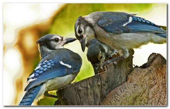 Image Perching Bird Indigo Bunting Goose Bird Wildlife