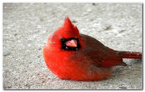 Image perching bird wildlife beak bird