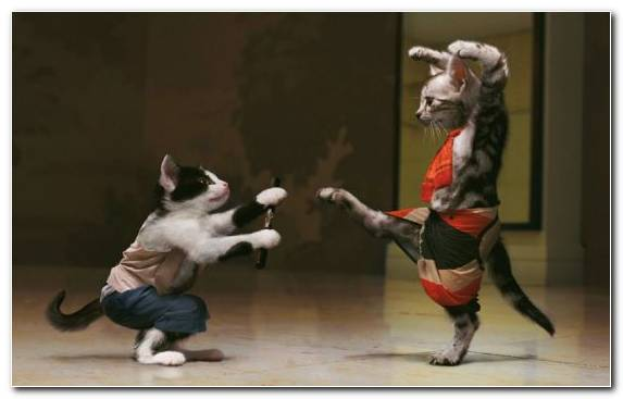 Image Performance Performing Arts Small To Medium Sized Cats