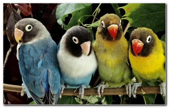 Image Perico Beak Parrot Poster Parakeet