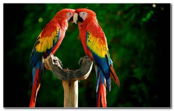 Image Perico Bird Parakeet Macaw Beak