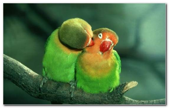 Image perico parrot bird parakeet youtube