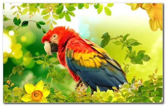 Image Perico Scarlet Macaw Bird Beak Eclectus Parrot