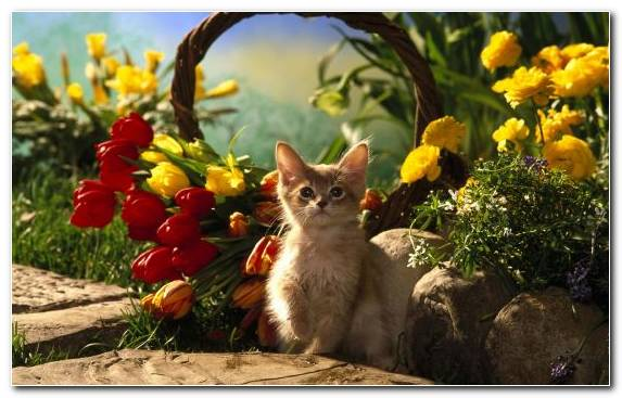 Image Persian Cat Flora Animal Kitten