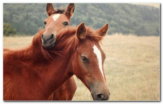 Image Pet Colt Steppe Foal Stallion