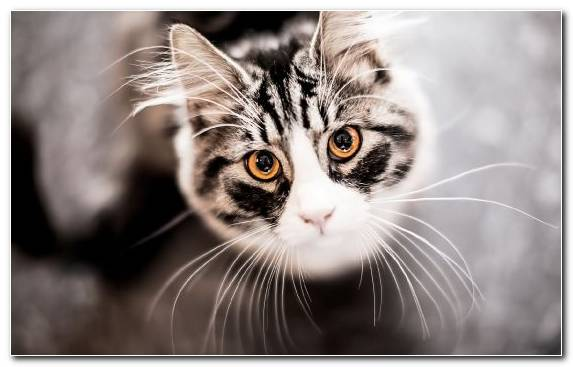 Image Pet Eye Small To Medium Sized Cats Kitten Moustache