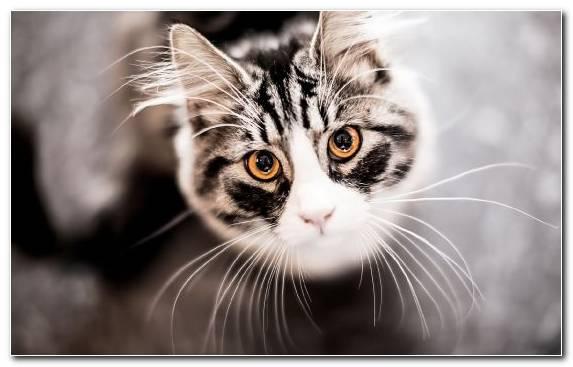 Image Pet Eye Small To Medium Sized Cats Kitten Moustache