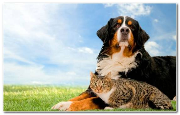 Image Pet Pet Sitting Grasses Dogcat Relationship Cat