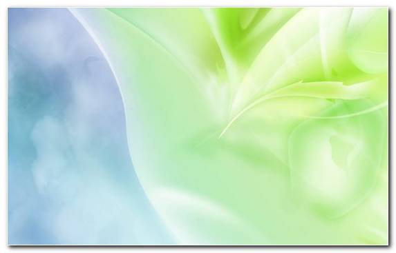Image Petal Color Green Leaf Close Up