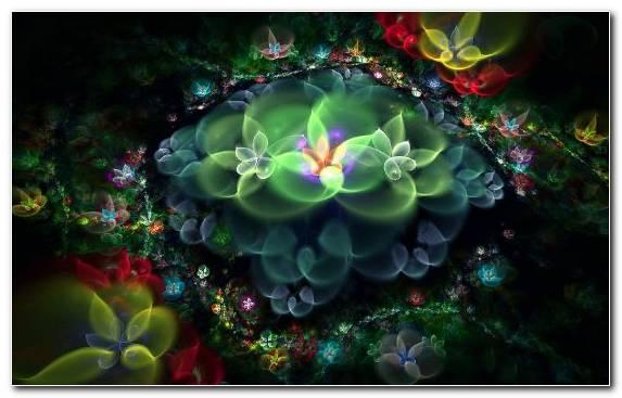 Image Petal Flora Curve Aquatic Plant Nature