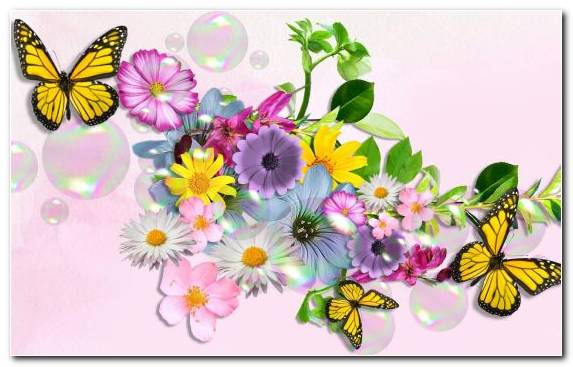 Image Petal Invertebrate Insect Moths And Butterflies Flora