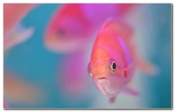 Image Petal Macro Photography Pinkie Pink Underwater