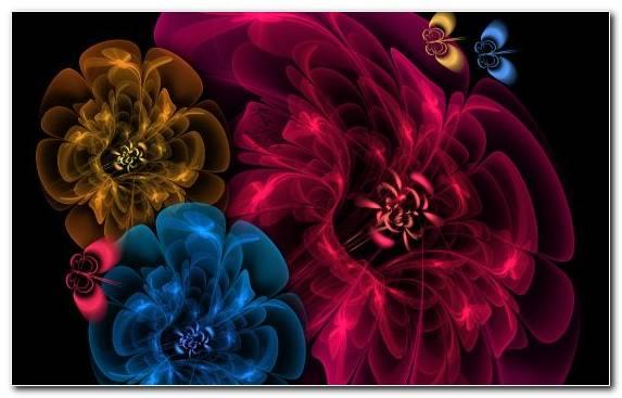 Image Petal Magenta Fractal Rose Family Rose