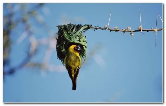 Image Piciformes Wing Tree Beak Fauna