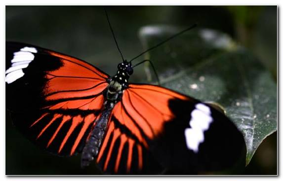 Image Pieridae Arthropod Pollinator Borboleta Insect