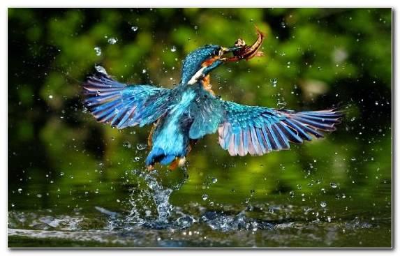 Image pierrot bird wildlife beak feather