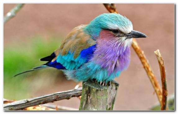 Image Pierrot Coraciiformes Hummingbird Wildlife Beak