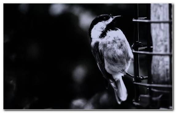 Image Pierrot Darkness Bird Monochrome Feather