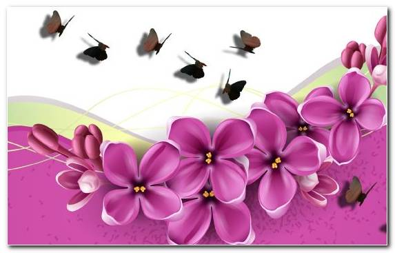 Image Pink Moths And Butterflies Flora Butterfly Flowering Plant