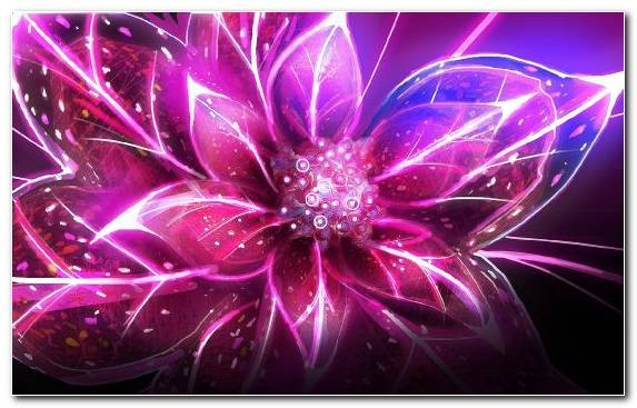 Image pink pink flowers blue rose graphics violet