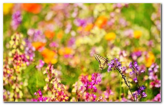Image Plant Factory Spring Annual Plant Pollinator