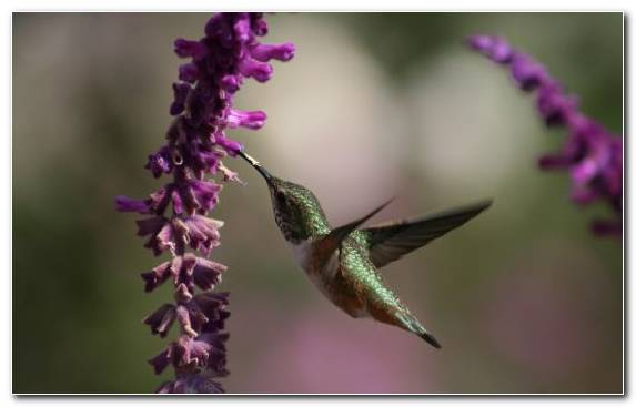 Image Plant Stem Annas Hummingbird Beak Hummingbird Wildlife