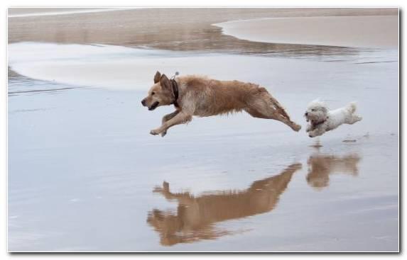 Image Play Dog Breed Wildlife Dog Breed Group Water