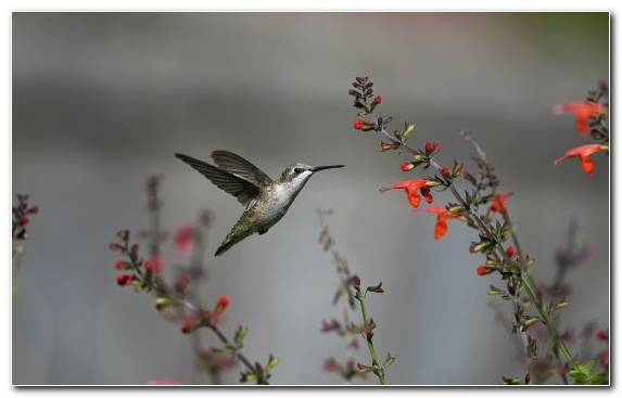 Image Pollinator Bird Branch Morning Wildlife