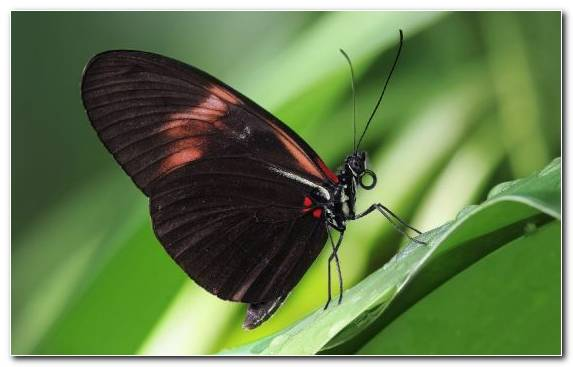 Image Pollinator Brush Footed Butterfly Arthropod Butterfly Moths And Butterflies