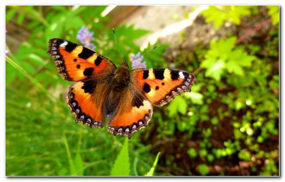 Image Pollinator Brush Footed Butterfly Insect Monarch Butterfly Moths And Butterflies