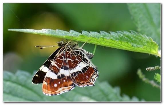 Image Pollinator Butterfly Moth Lycaenid Pieridae