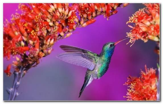 Image Pollinator Fauna Nectar Flora Beak