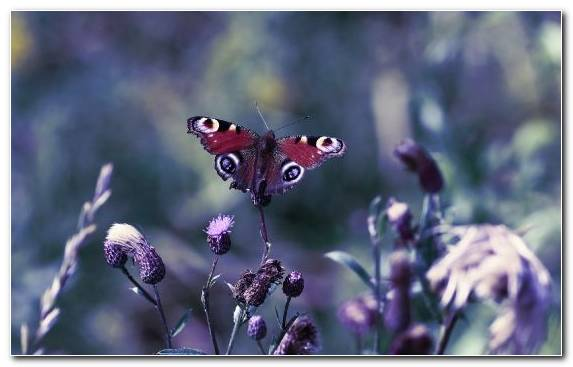 Image Pollinator Illustration Moths And Butterflies Invertebrate Insect
