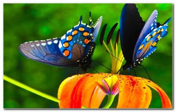 Image Pollinator Invertebrate Color Coloring Book Nectar