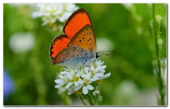 Image pollinator invertebrate moths and butterflies flower butterfly