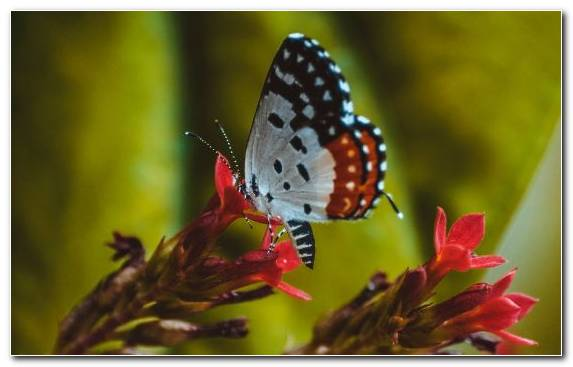 Image Pollinator Nectar Butterfly Ornament Insect