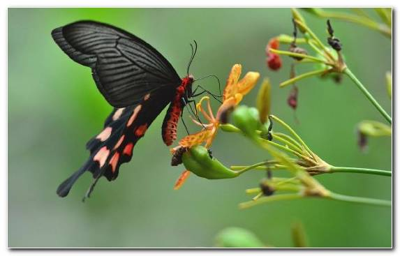 Image Pollinator Paper Moth Moths And Butterflies Invertebrate