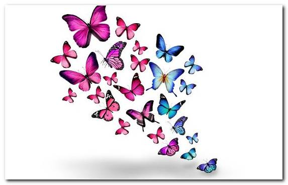 Image Pollinator Purple Butterfly Design Moths And Butterflies
