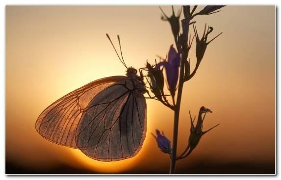 Image Pollinator Sky Butterfly Branch Arthropod