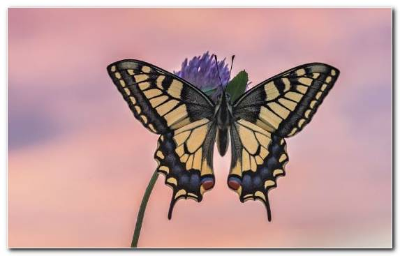Image Pollinator Stock Illustration Moth Swallowtail Butterfly Moths And Butterflies