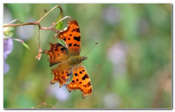 Image Pollinator Wildlife Macro Pieridae Moths And Butterflies