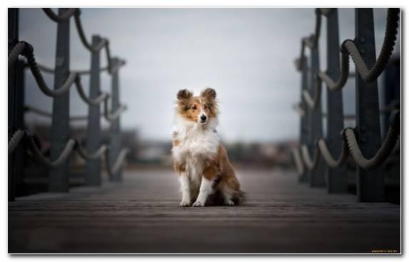 Image Pomeranian Spiez Dog Like Mammal Labrador Retriever Puppy